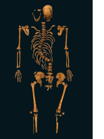 Richard III's skeleton. (University of Leicester)
